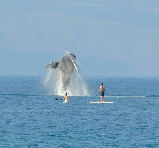 paddle board whale